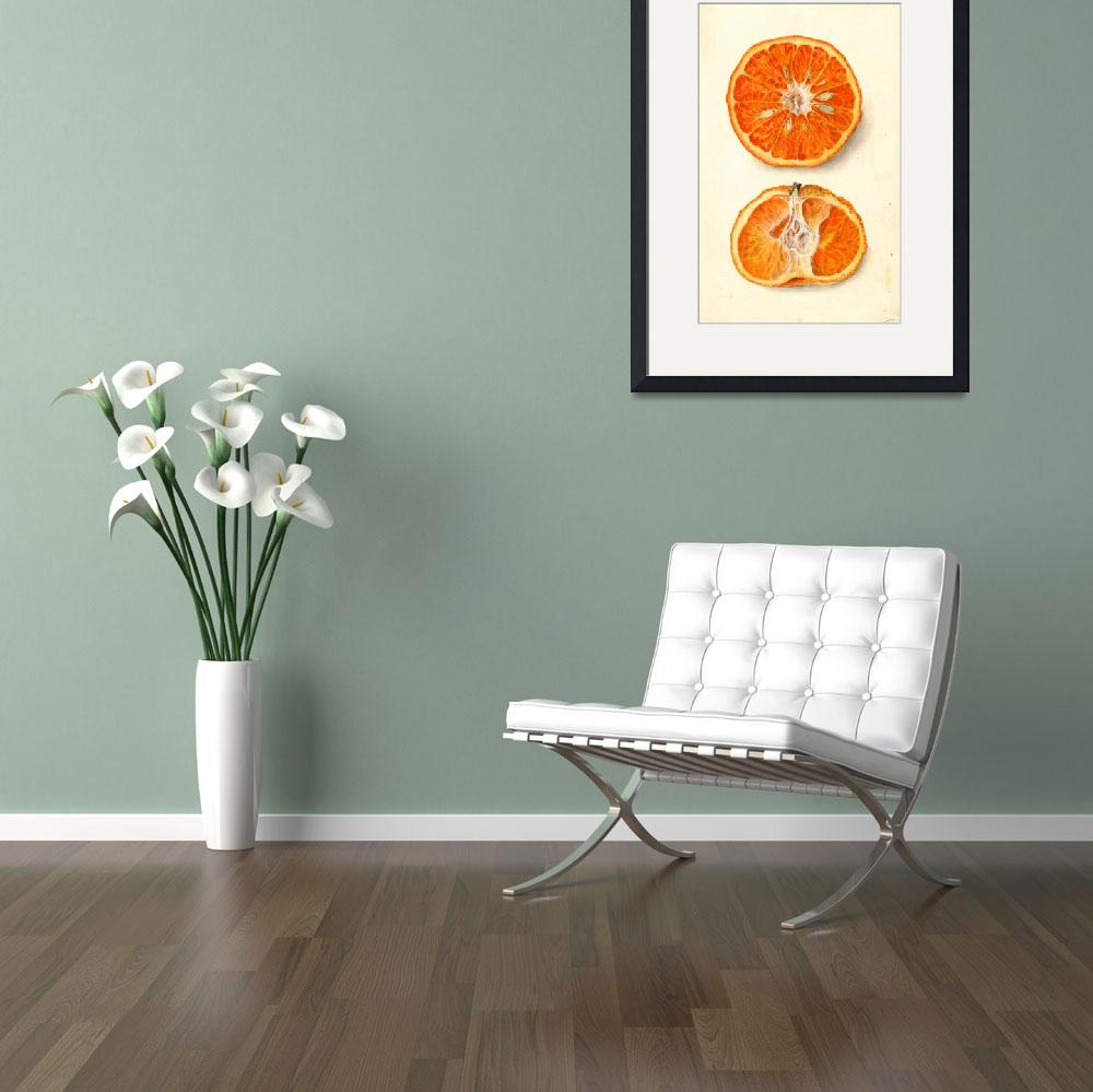 """Vintage Painting of Tangerines&quot  by Alleycatshirts"