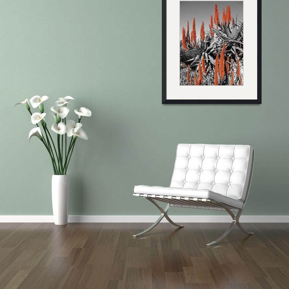 """""""Aloes in bloom""""  (2006) by markseath"""