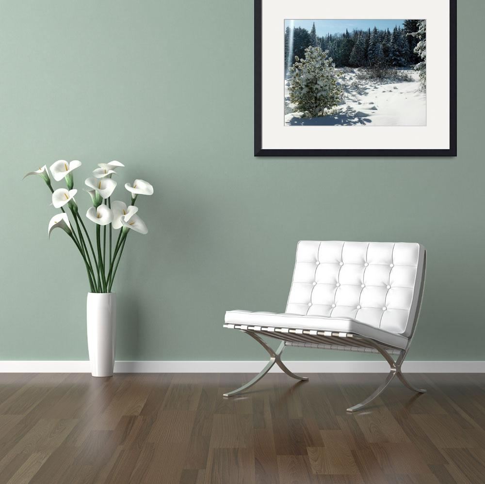 """""""Snow flowers on Pinetree&quot  (2013) by schlicht"""