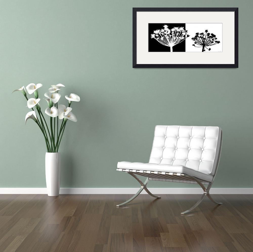 """""""Black and white Dandelion""""  (2011) by nomi"""