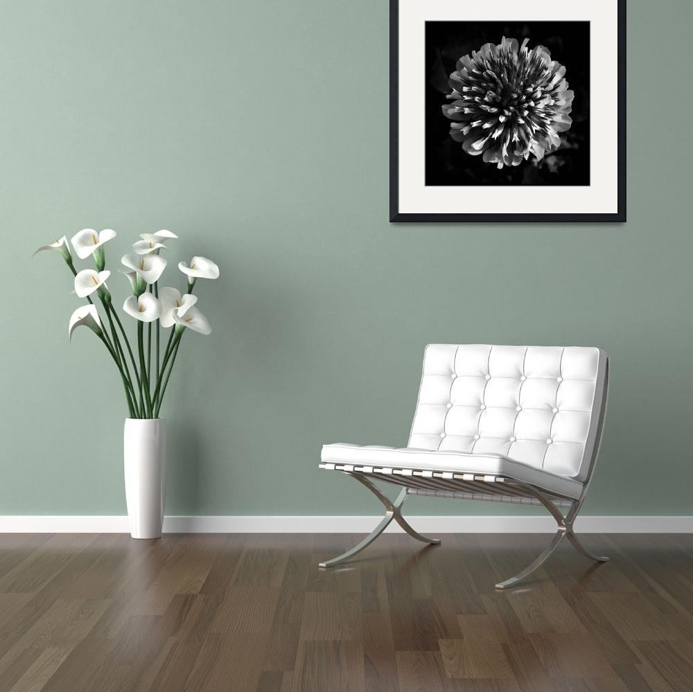 """""""Red Clover In Black And White lV&quot  (2010) by bavosiphotoart"""