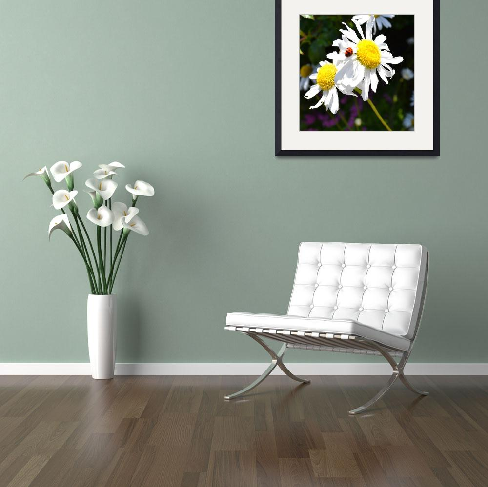 """""""June Daisies with Ladybug""""  (2011) by PatriciaSanders"""