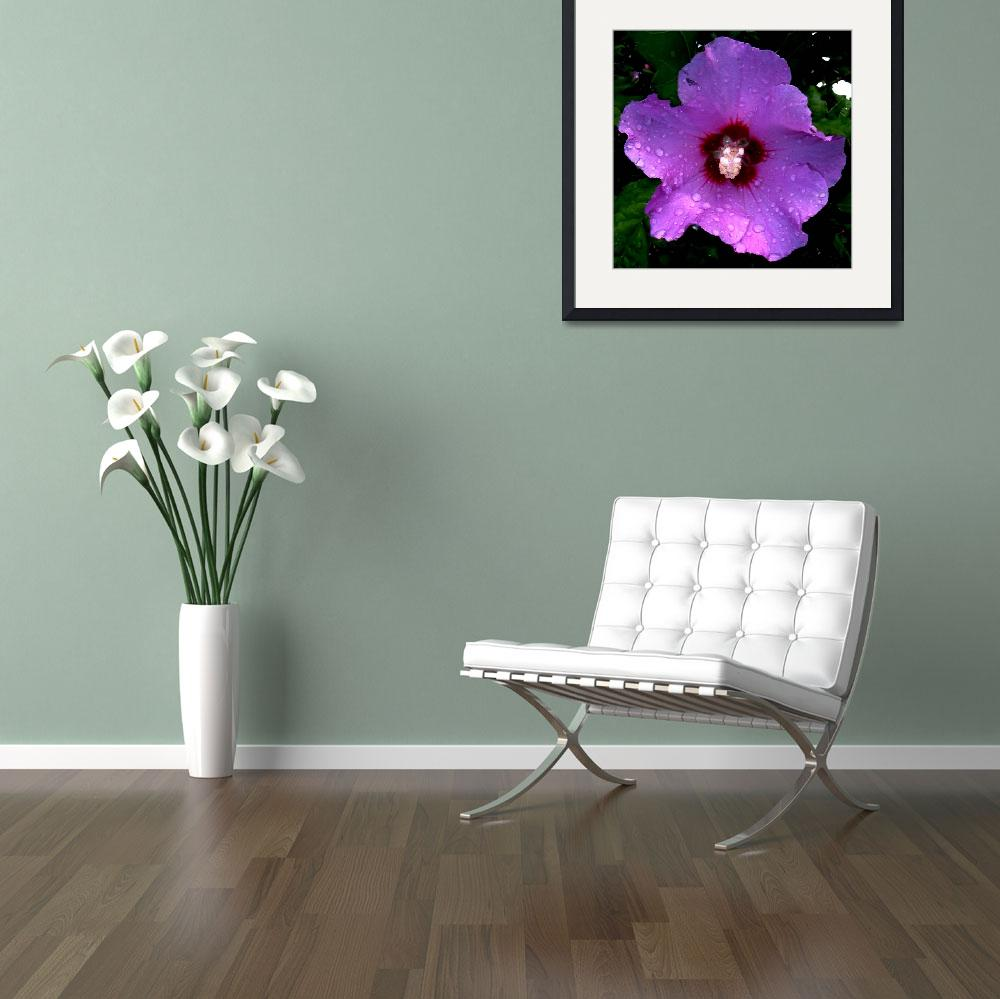 """""""Rose of Sharon&quot  (2008) by bavosiphotoart"""