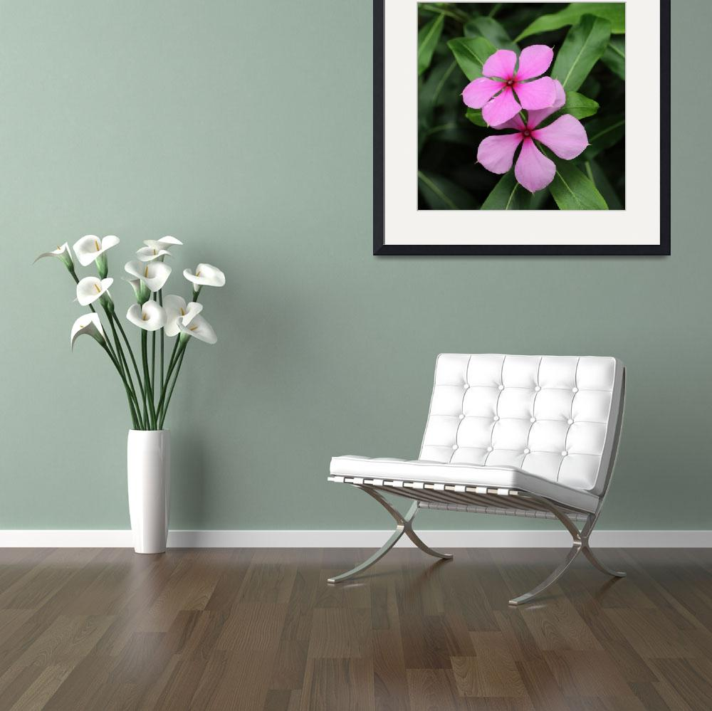 """""""Twin Madagascar Periwinkle Flowers&quot  (2014) by AdrianWale"""