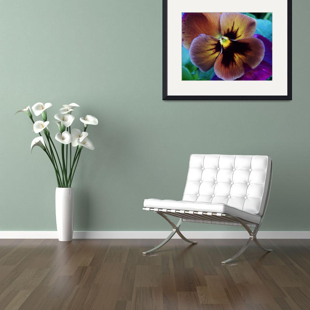 """""""Pansy""""  (2014) by StephanieBrower"""