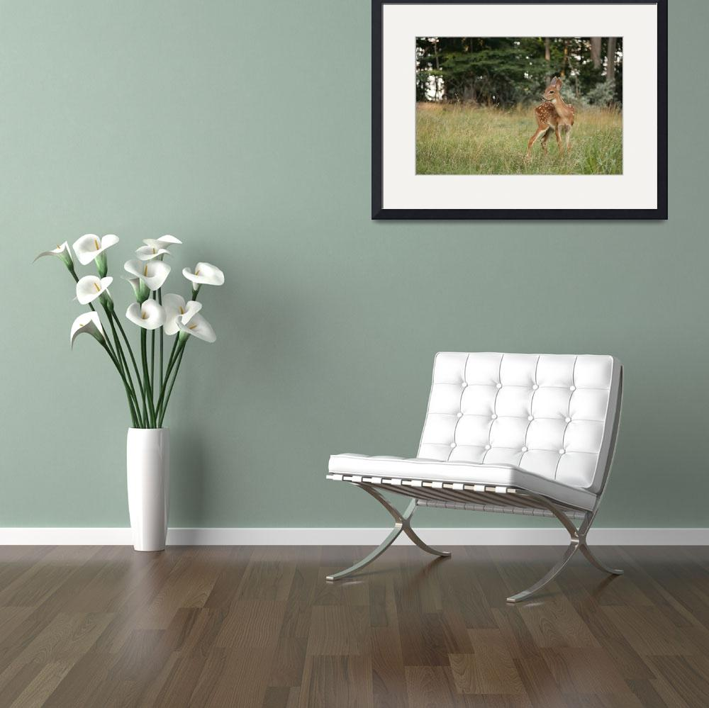 """""""Whitetail Fawn&quot  (2007) by dba"""