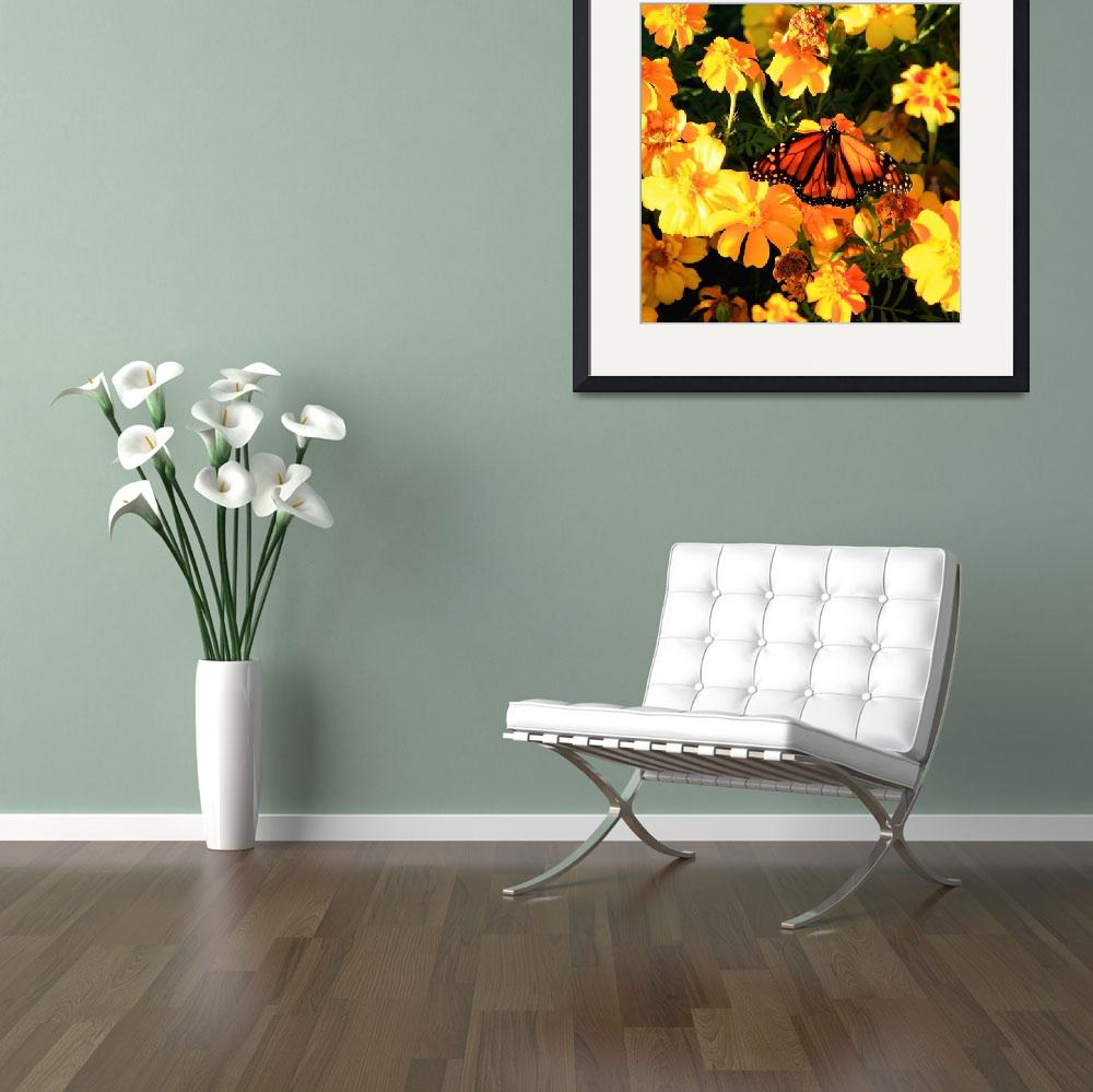 """""""Monarch and Marigolds""""  (2009) by rayjacque"""
