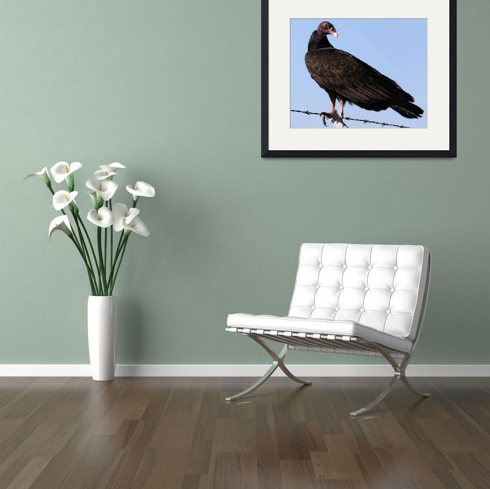 """Turkey Vulture&quot  by DonBakerPhotography"