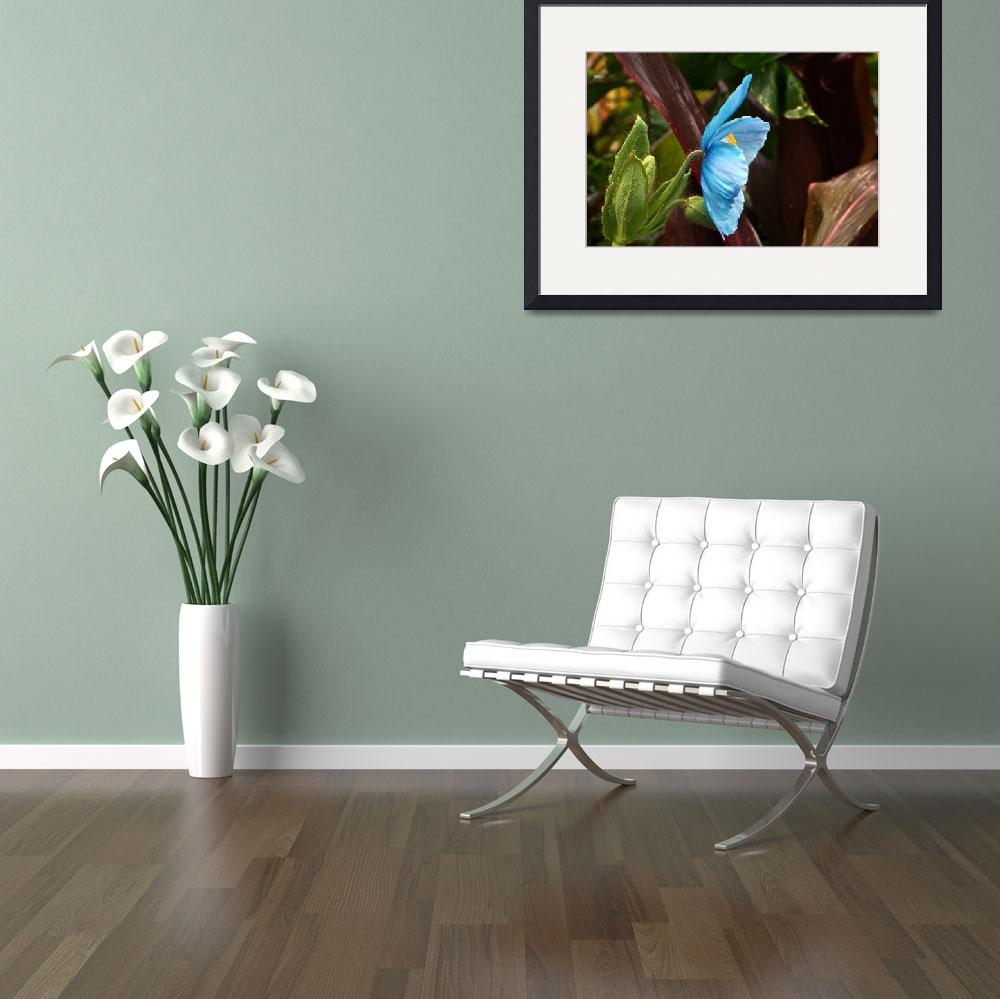 """""""The Colors of the Himalayan Blue Poppy""""  (2014) by LightHeart"""