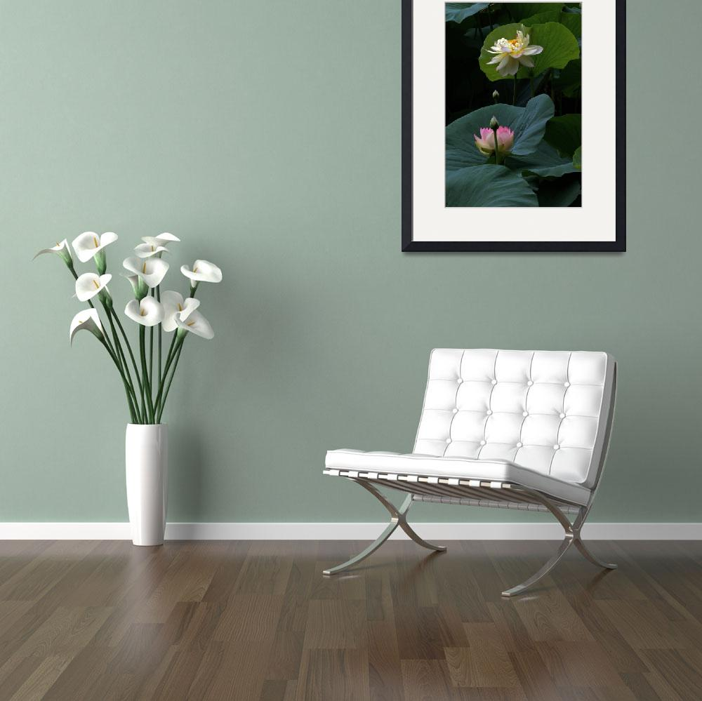"""Lotus Beauties In White Pink Gold And Green&quot  (2013) by LightHeart"