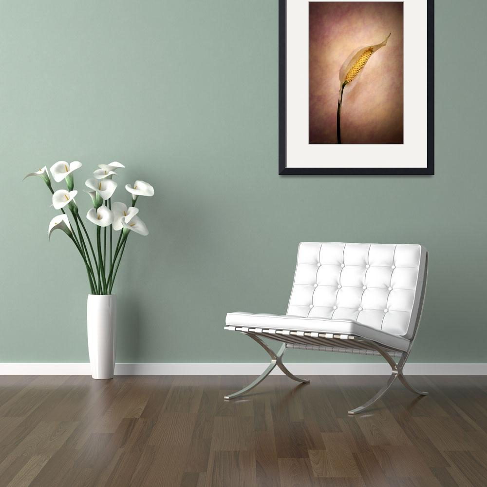 """""""Peace for Lily""""  (2014) by brianraggatt"""