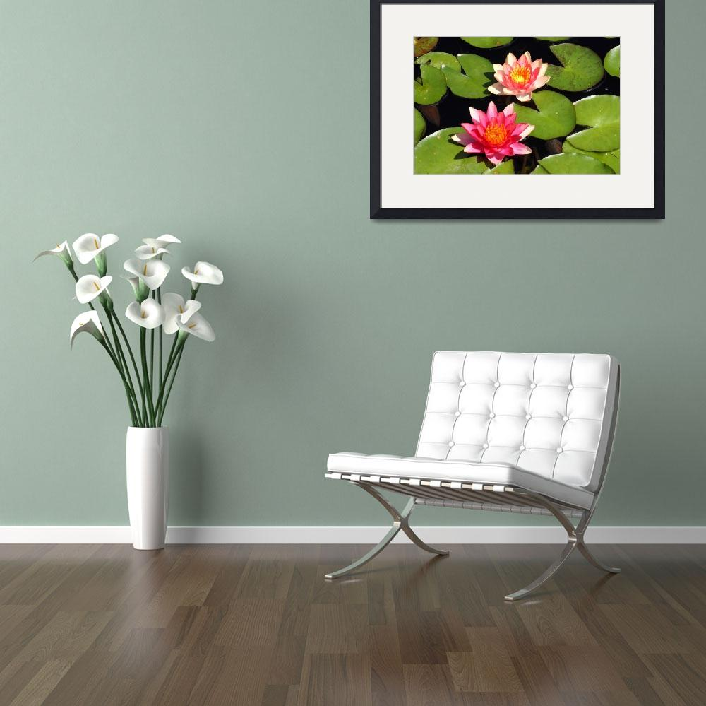 """""""Pink Water Lilies 2&quot  (2009) by FordLou"""