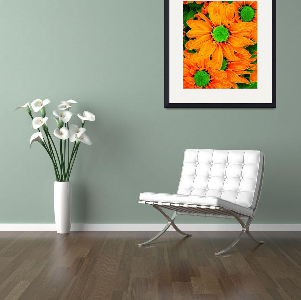 """""""Pop Daisies 13&quot  (2012) by AmyVangsgard"""