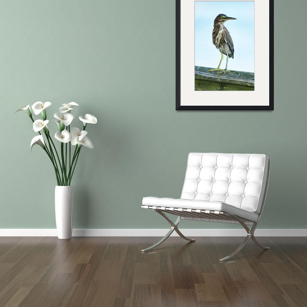 """""""Green Heron On The Dock""""  (2015) by DBenoit"""