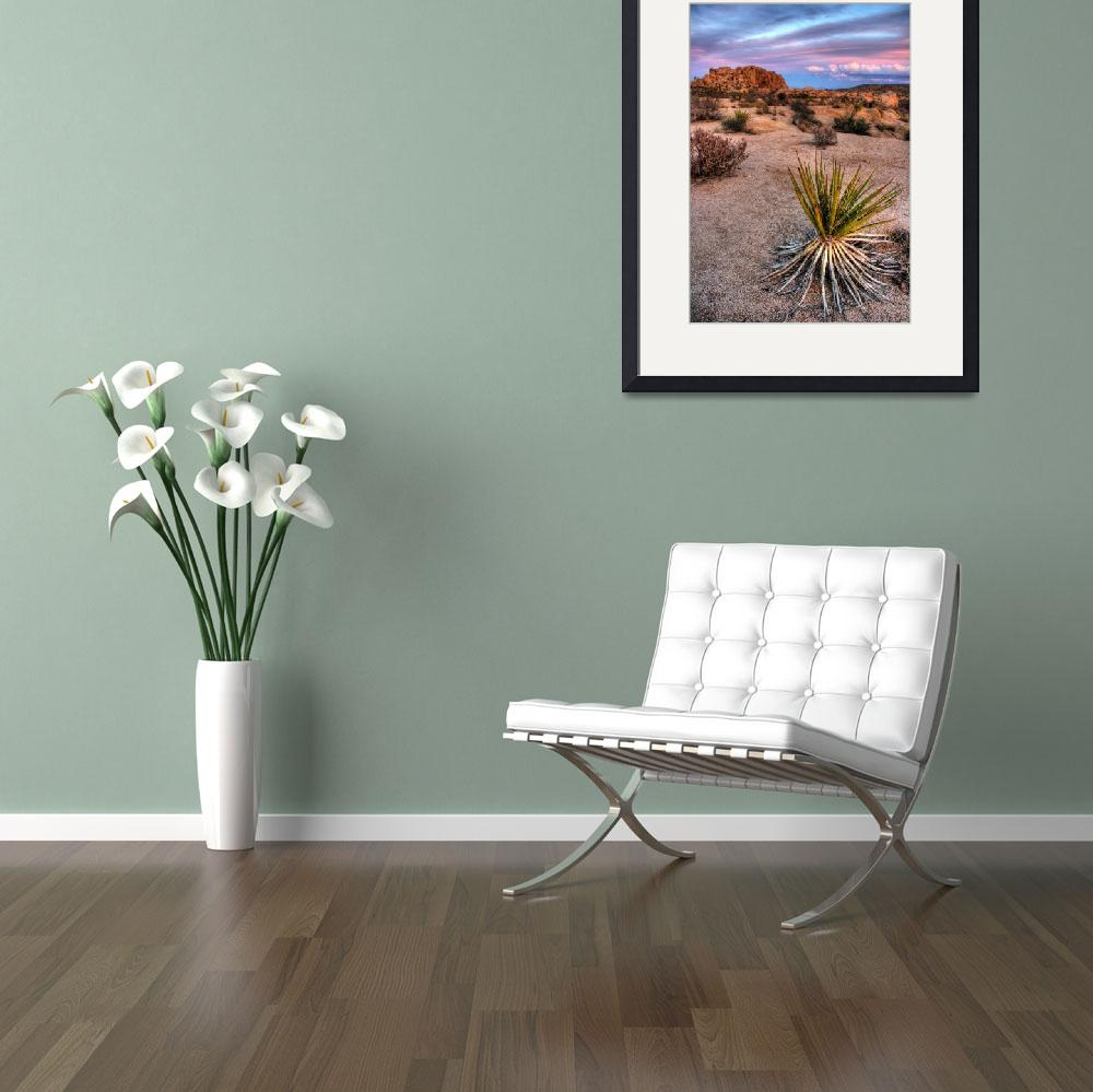"""""""Mojave Yucca&quot  by flyingpanther"""