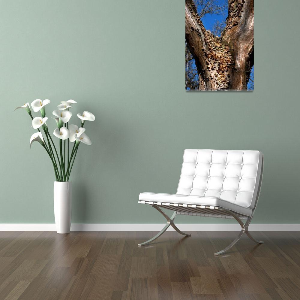 """""""Fungi on a Snag""""  by lyndazurn"""