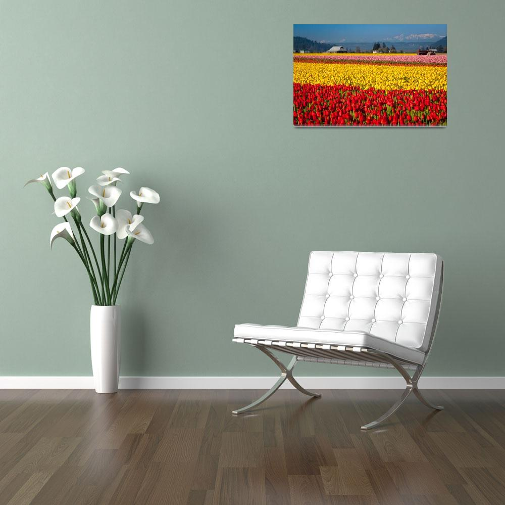 """""""Tulips and the Olympics""""  (2011) by Inge-Johnsson"""
