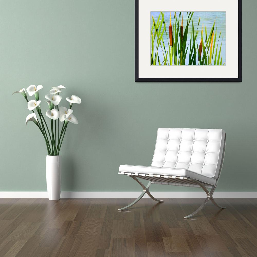 """""""Cattails&quot  (2012) by privera"""