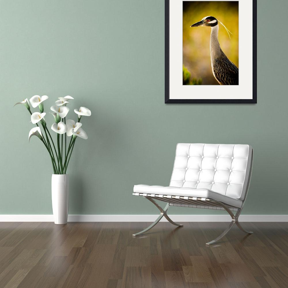 """Yellow Crowned Night Heron&quot  (2011) by PSimmons"