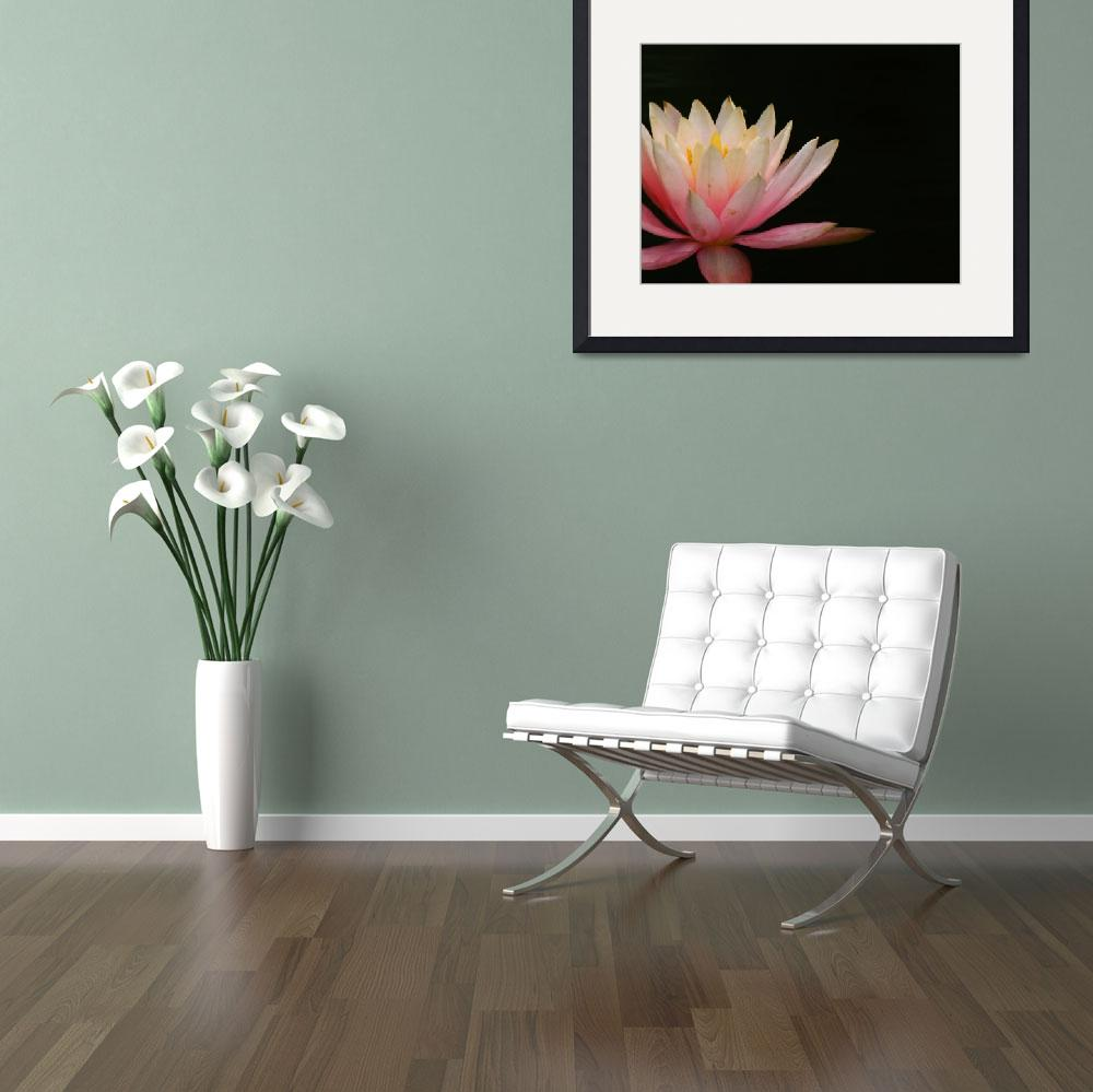 """""""Pink Water Lily&quot  (2011) by swaby"""