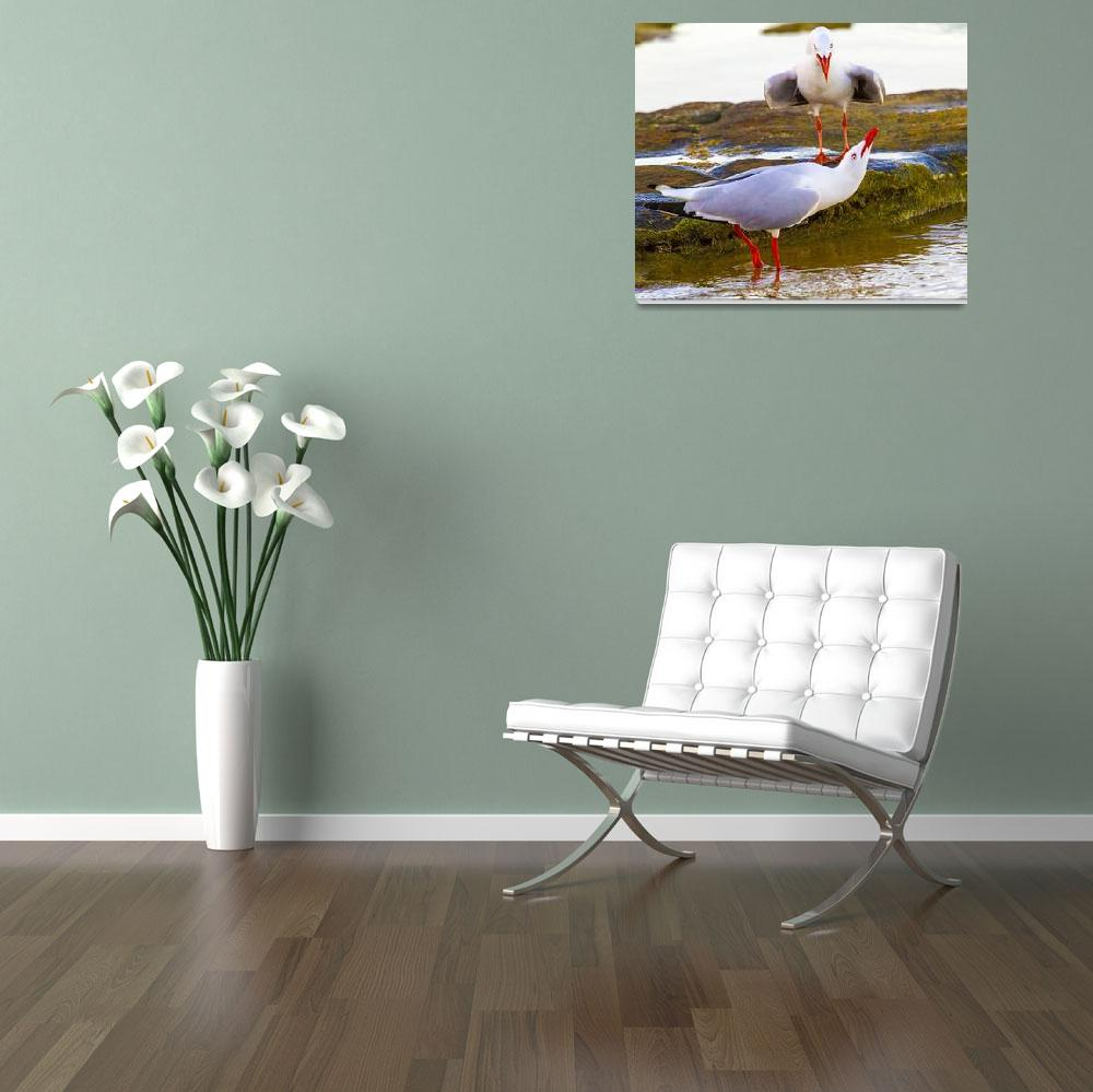 """Squabbling Seagulls, Brisbane, Queensland, Austral""  (2013) by MrBennettkent"
