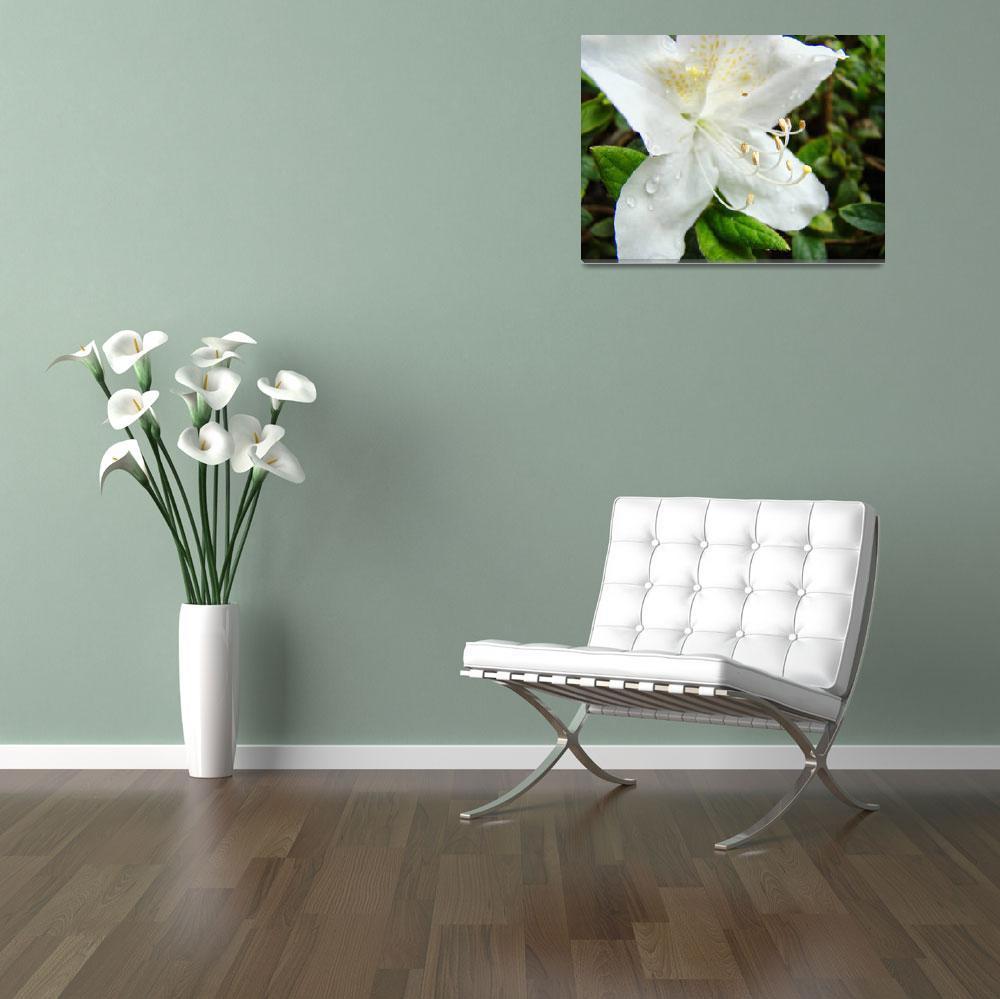 """White Azalea Flowers Art Prints Azaleas Nature Art&quot  (2009) by BasleeTroutman"