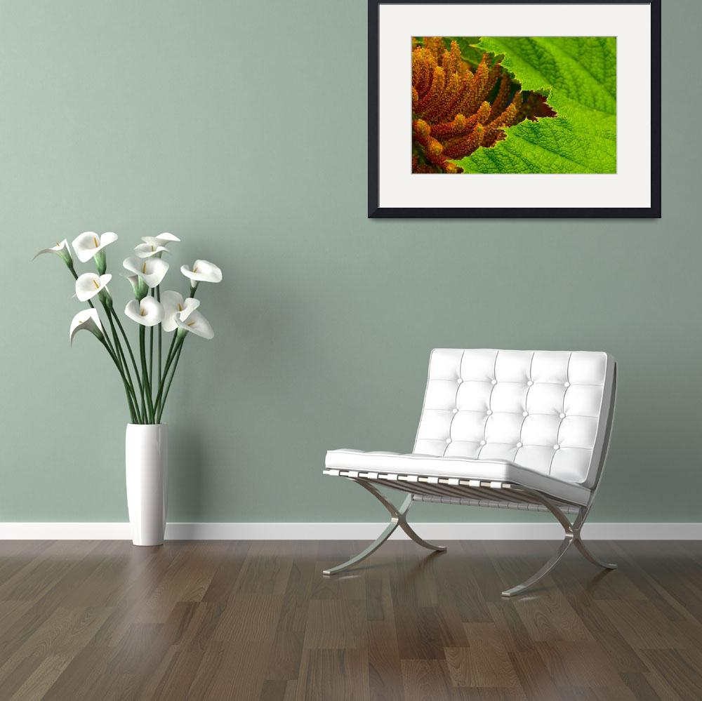 """""""Contrasts within one plant&quot  (2008) by TonyDoddPhotography"""