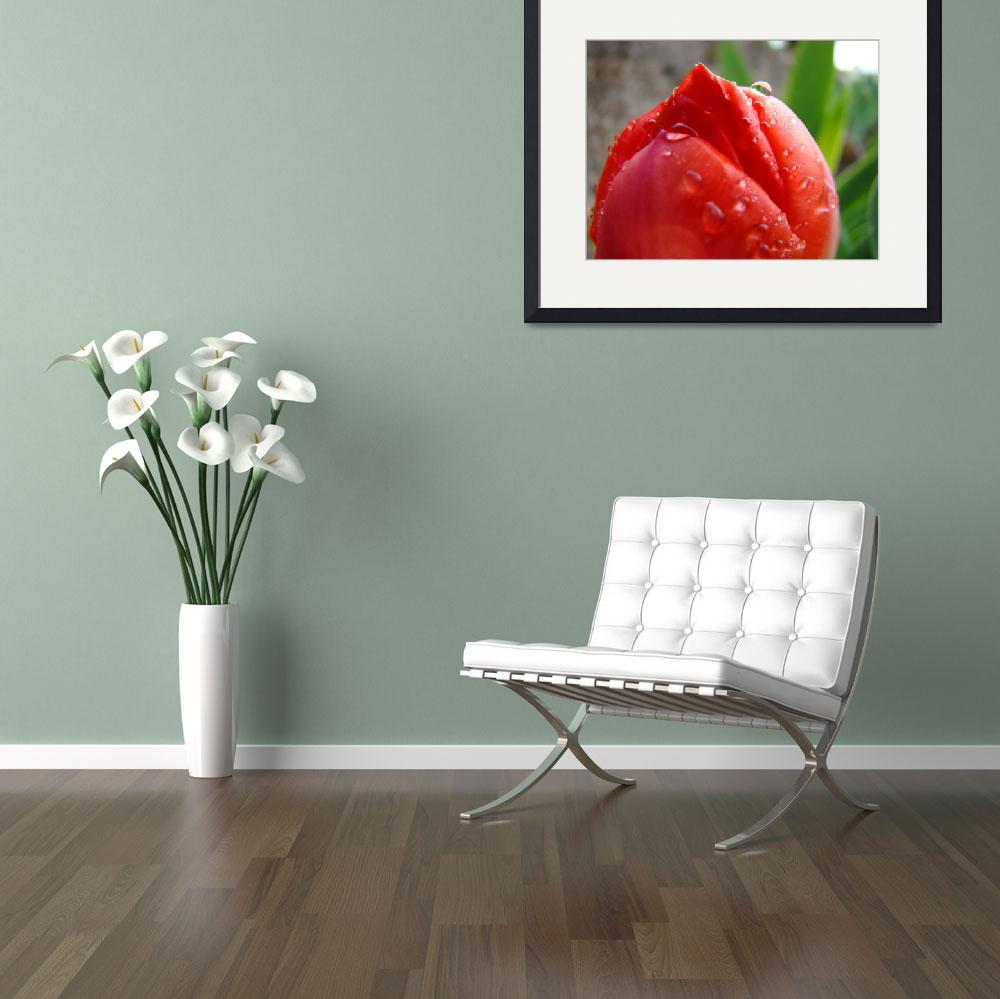 """""""Christmas Gift Gallery RED TULIP Flower Art&quot  (2009) by BasleeTroutman"""