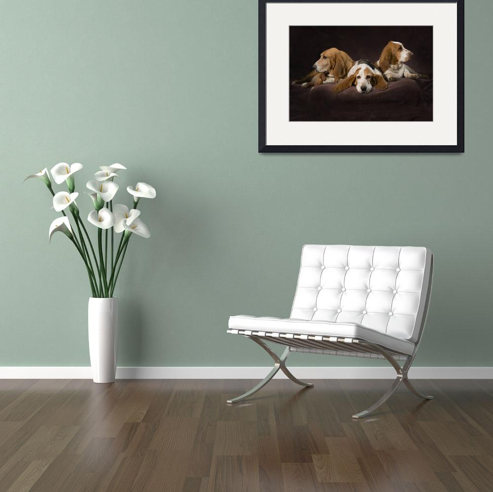 """Three Basset Hounds On Brown Muslin Backdrop&quot  by DesignPics"