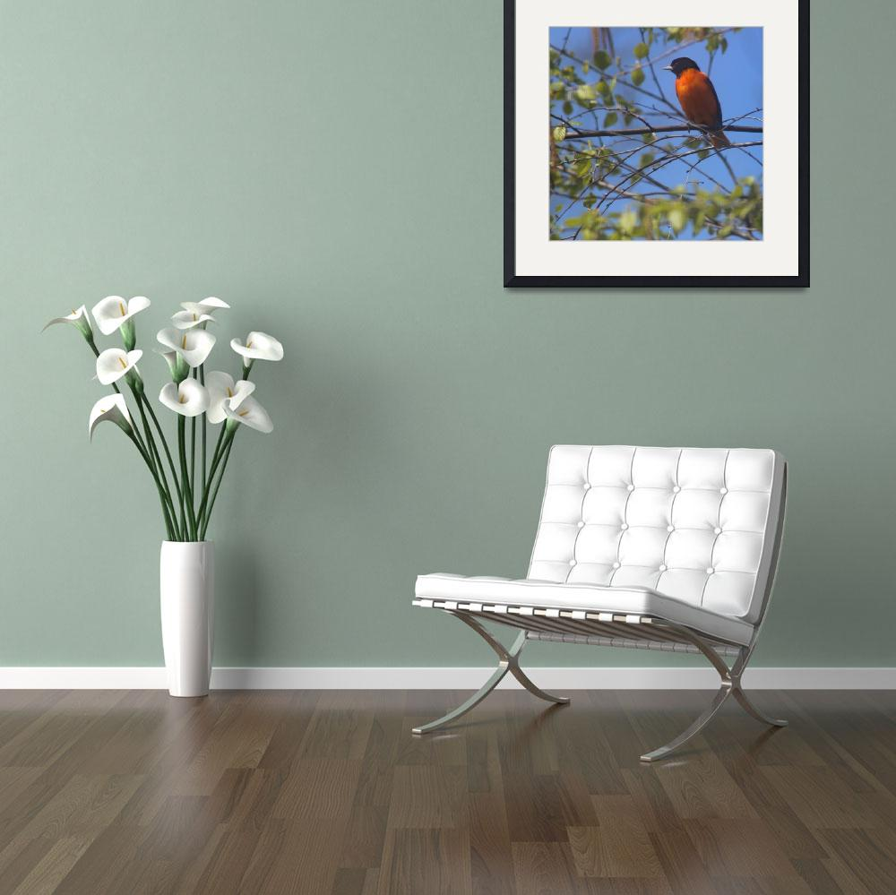 """""""Baltimore Oriole with Blue Sky Square Format&quot  (2013) by KsWorldArt"""