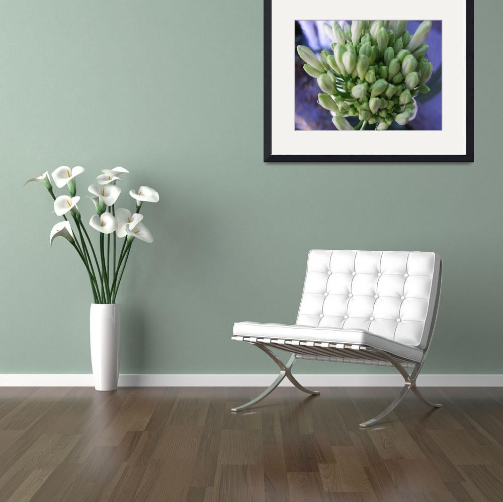 """White Allium Buds&quot  (2009) by ChristopherInMexico"