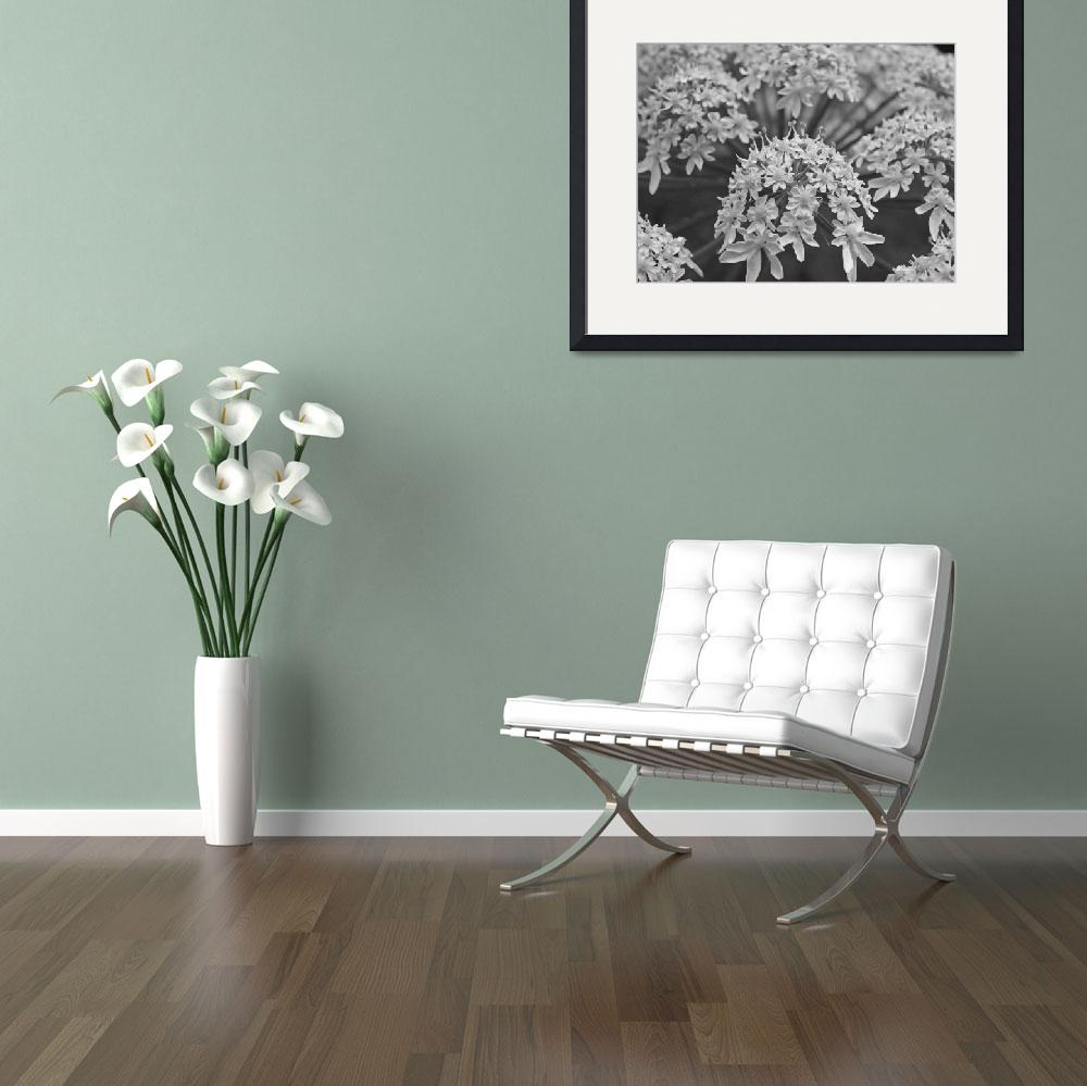 """""""Wildflower - Black And White Photography&quot  by artsandi"""