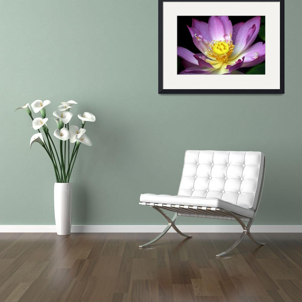 """Pinkish Purple Water Lilly with Yellow Seed Pod 7-&quot  by faf1967"