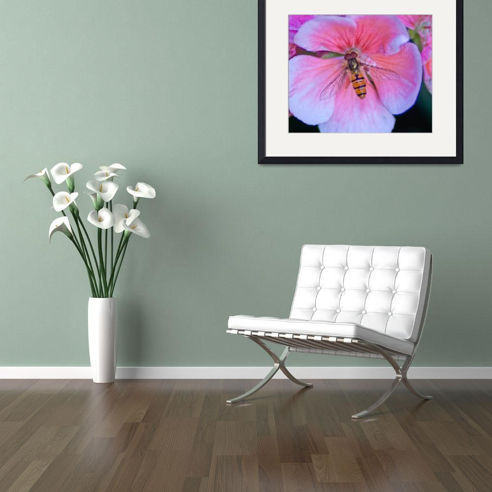 """""""pollinating bee on pink flower&quot  (2012) by brunopaolobenedetti"""