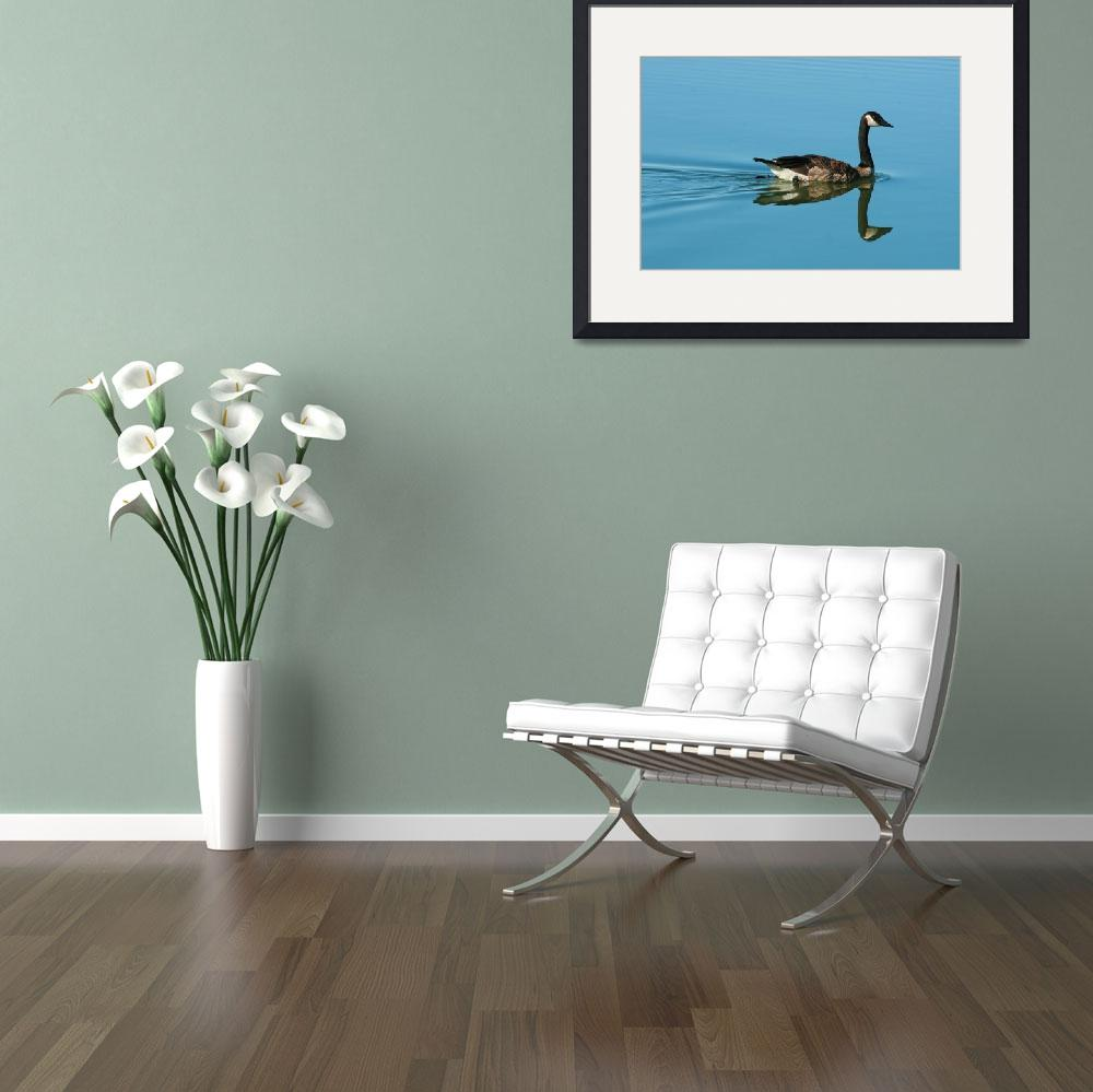 """""""Swimming Goose on a Calm Lake&quot  (2013) by rhamm"""