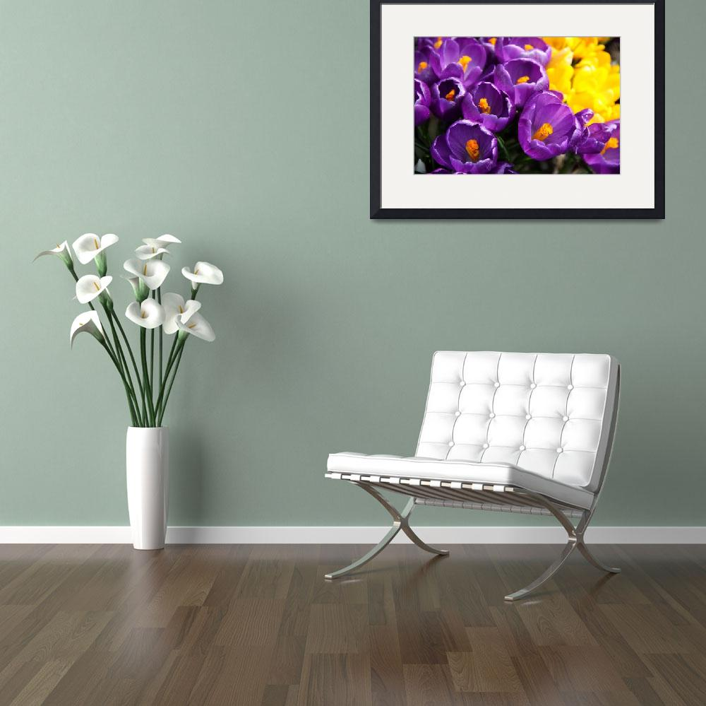 """""""Crocus blooms&quot  (2011) by stephcollier"""