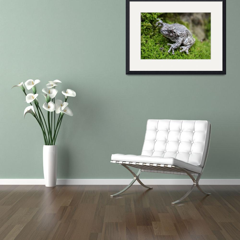 """""""Frog on the Moss""""  (2009) by kimmus122"""
