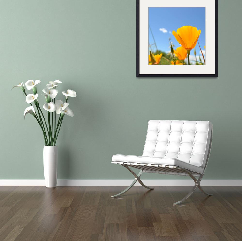 """""""Summer Poppy&quot  (2011) by PatriciaSanders"""