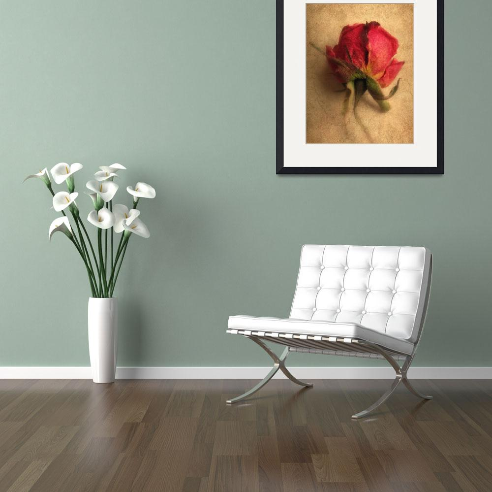 """""""Gentle Rose&quot  (2010) by JessicaJenney"""