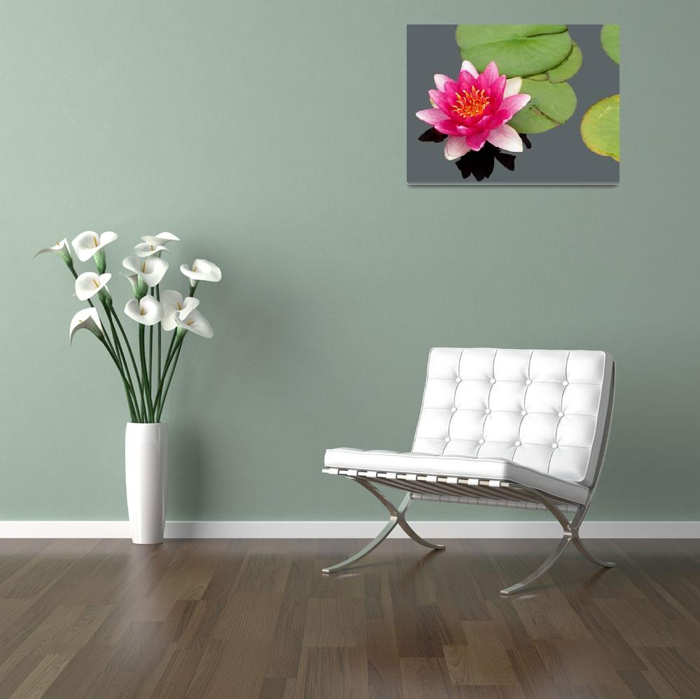 """Hardy Water Lily Nymphaea""  (2011) by Acedarter"