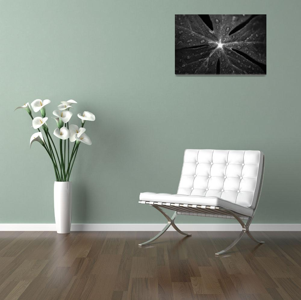 """""""Rain on Mayapple in black and white by Jim Crotty&quot  by jimcrotty"""