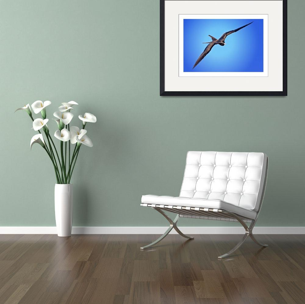 """""""Soaring Frigate Bird - Galapagos&quot  (2009) by BrianLewis"""