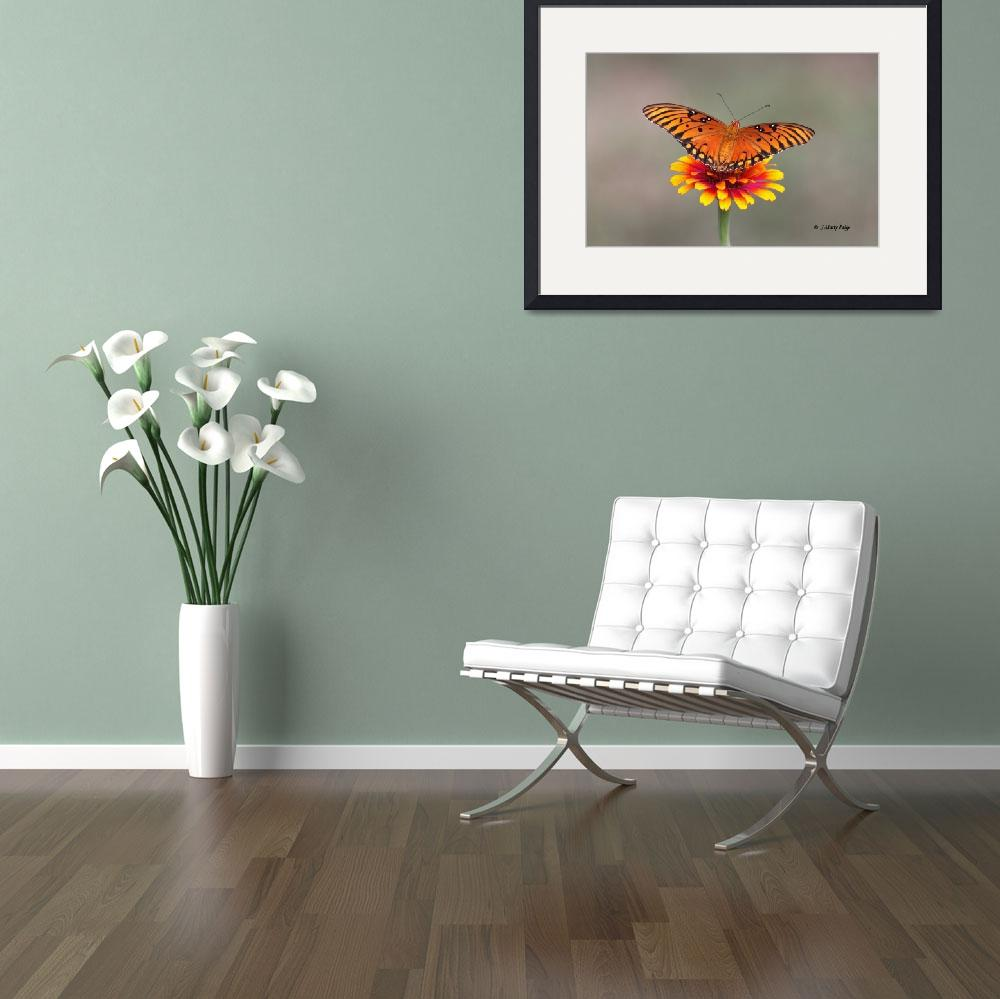 """""""Gulf Fritillary on Zinnia&quot  (2011) by Tanager"""