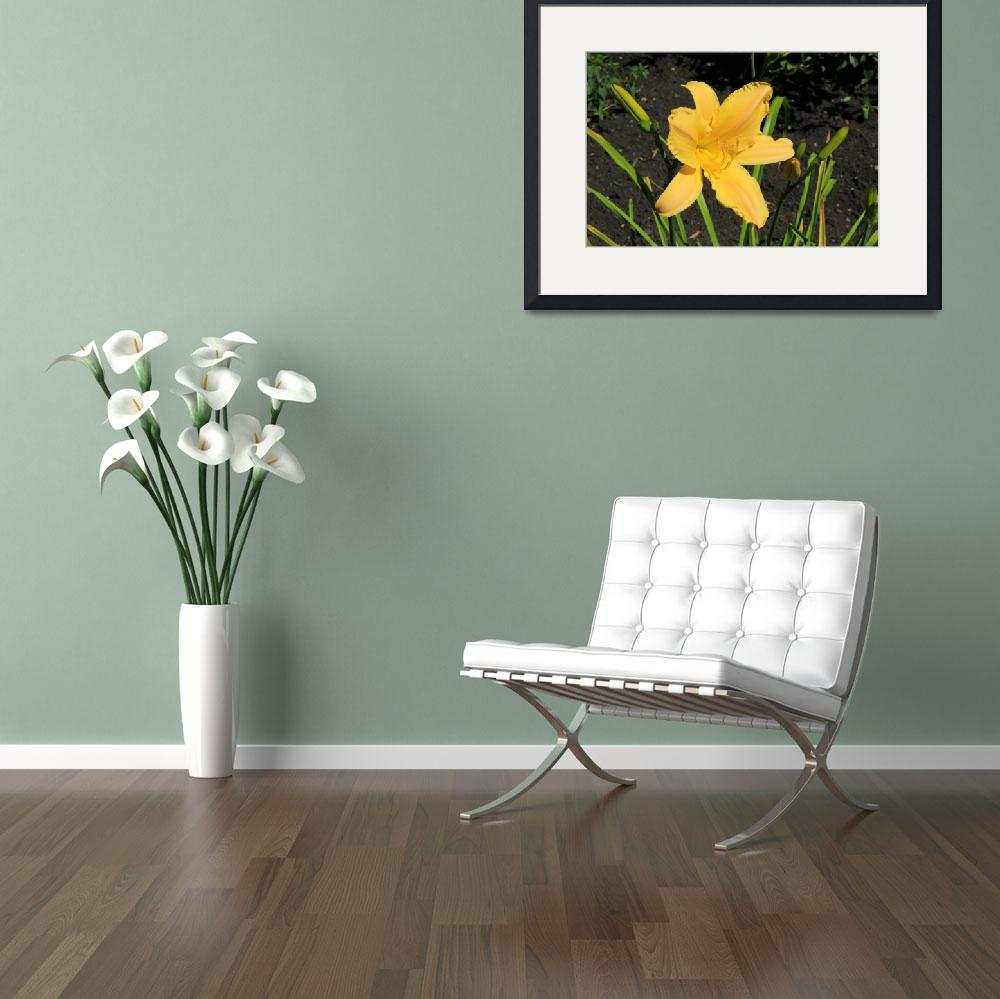 """""""Yellow Lily in a Garden&quot  (2015) by rhamm"""