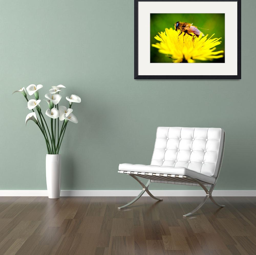 """""""Bee On A Yellow Flower In Spring&quot  (2010) by dc-photography"""