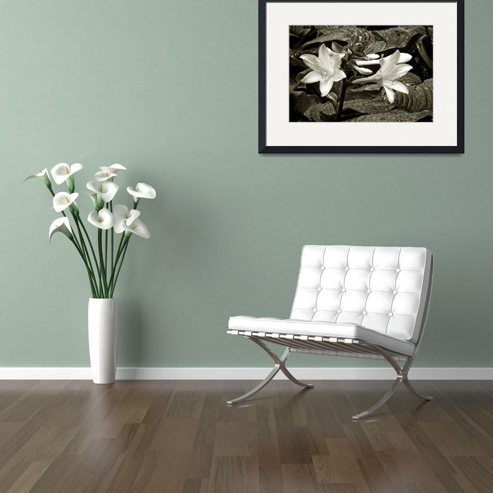 """""""THE EASTER LILLYS""""  by RWA"""