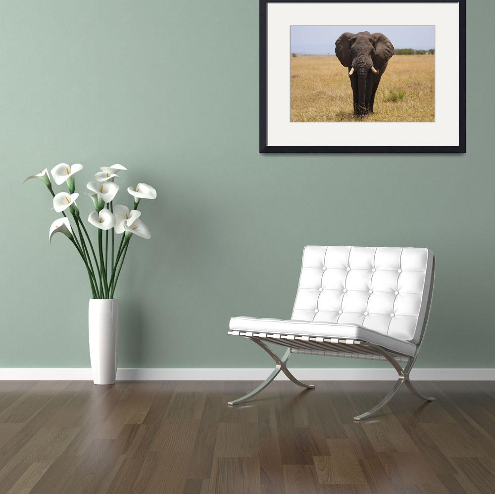 """""""Tusker&quot  by gc-photography"""