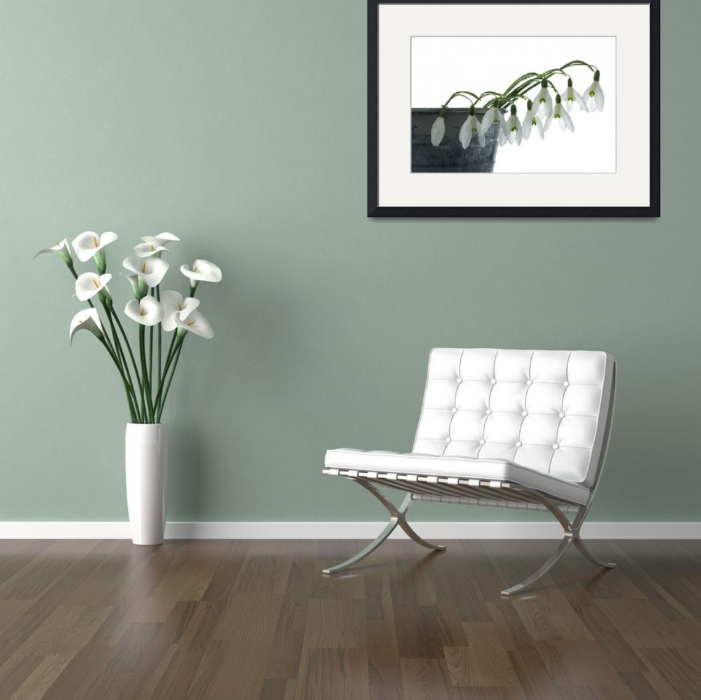 """""""Snowdrops in a Planter""""  (2014) by AnnG"""