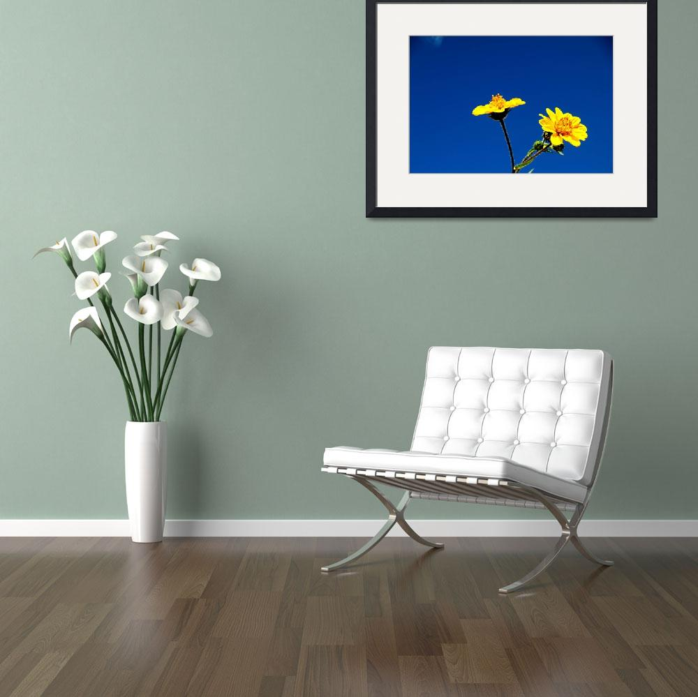 """""""Blue and Yellow&quot  by tiquis"""