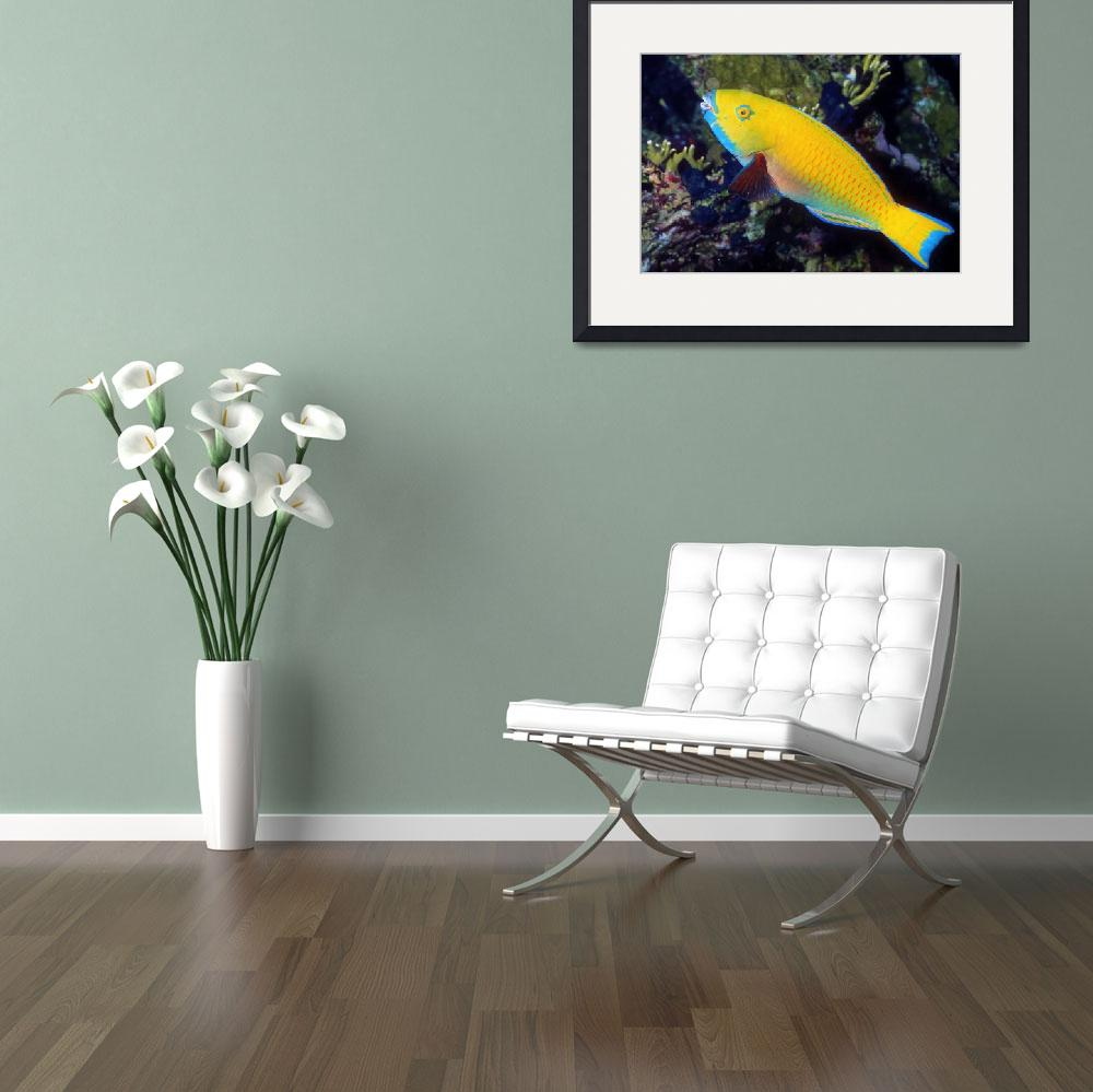 """Yellow Parrotfish""  (1993) by JoaoPonces"